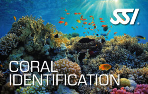 DECOSTOP SSI CORAL IDENTIFICATION
