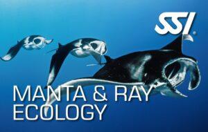 DECOSTOP SSI MANTA & RAY ECOLOGY